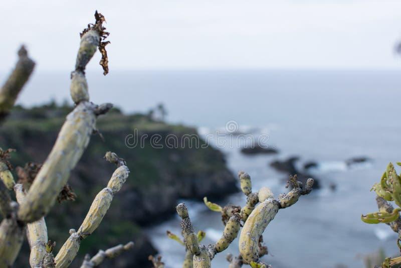 Cactus avec le fond trouble photo libre de droits