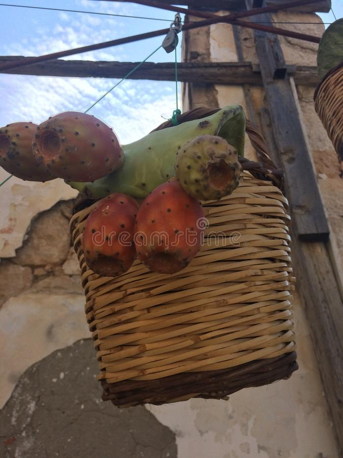 Cactus avec le fruit dans un pot Opuntia de figuier de barbarie, opuntia de figue de Barbarie ficus-indica et avec des fruits photos libres de droits