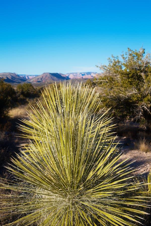 Cactus avec une vue image libre de droits