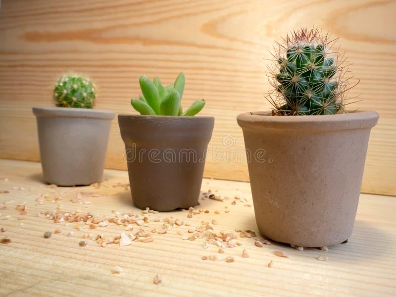 Cactus bajo luz foto de archivo