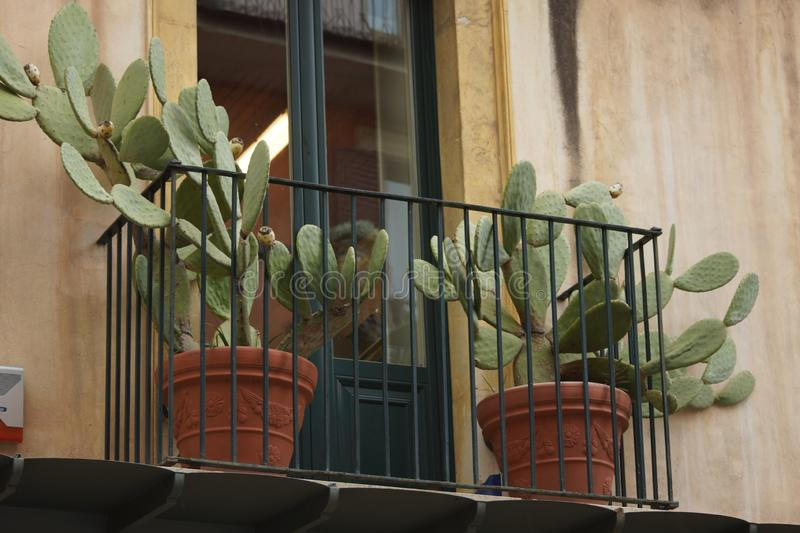 Cactus on a balcony in Italy royalty free stock images