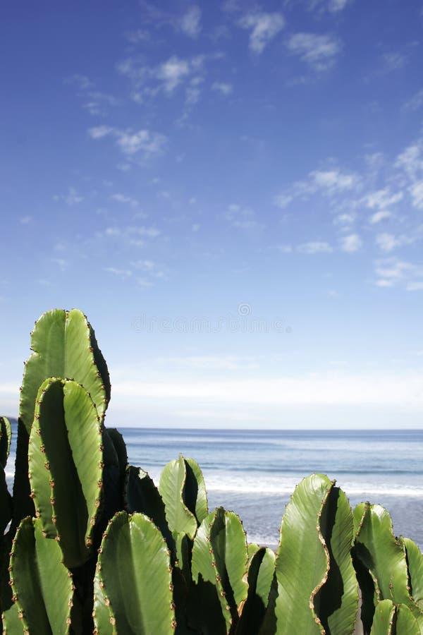 Cactus Beach stock photo