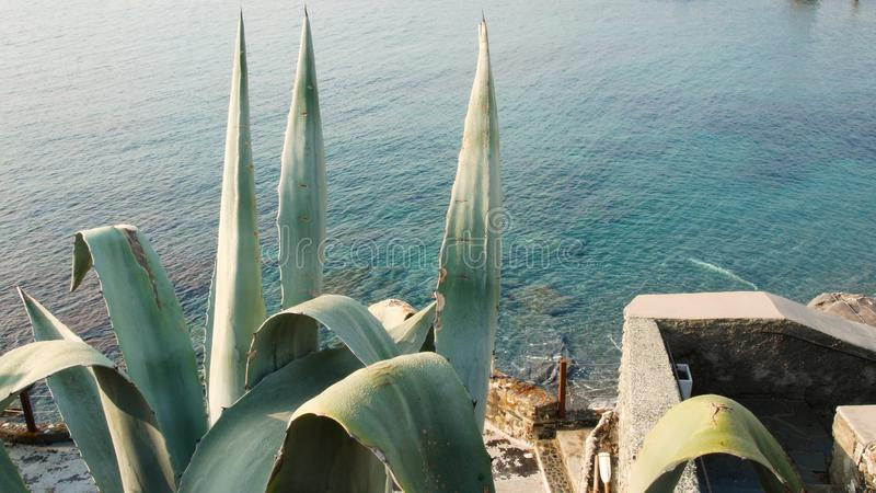 Cactus on the beach of Nervi, Genoa in spring, panoramic view of the Ligurian sea stock images