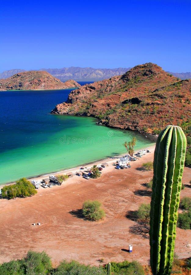 Cactus, beach and sea stock photography