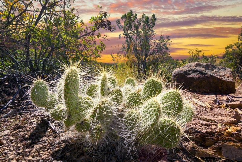 Cactus bij Zonsopgang royalty-vrije stock afbeeldingen