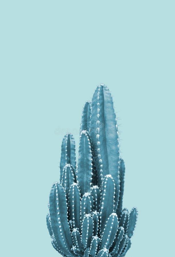Cactus on blue background. Minimal stillife. Creative unusual royalty free stock images