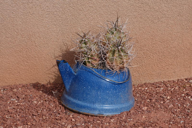 Download Cactus in a blue pot stock image. Image of outdoors, cactus - 36691289