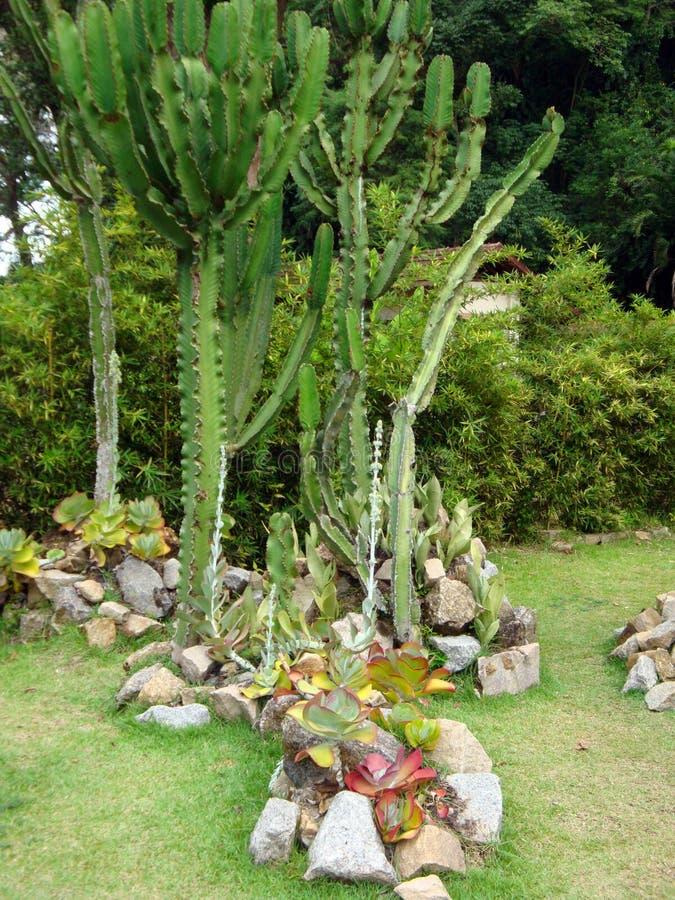 Cactus in botanical garden stock image