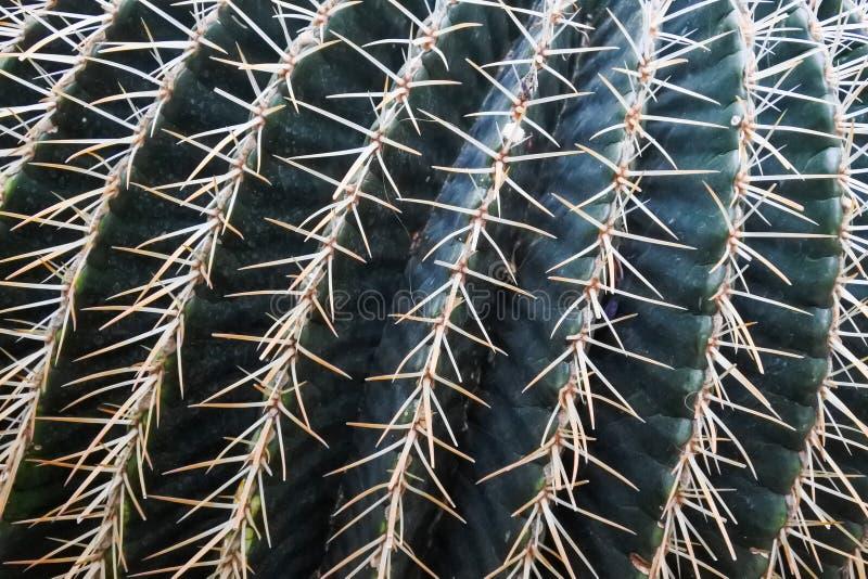 Cactus in a Botanical Garden in Geneva royalty free stock photos