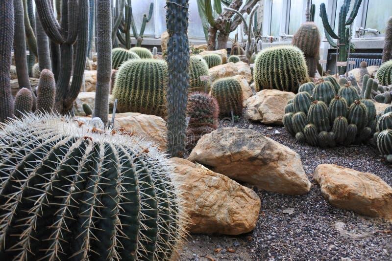 Cactus in a Botanical Garden in Geneva stock images