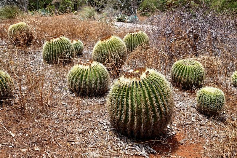Cactus in botanical garden. stock photo