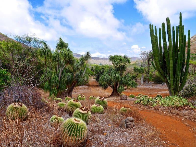 Cactus in botanical garden. stock photos