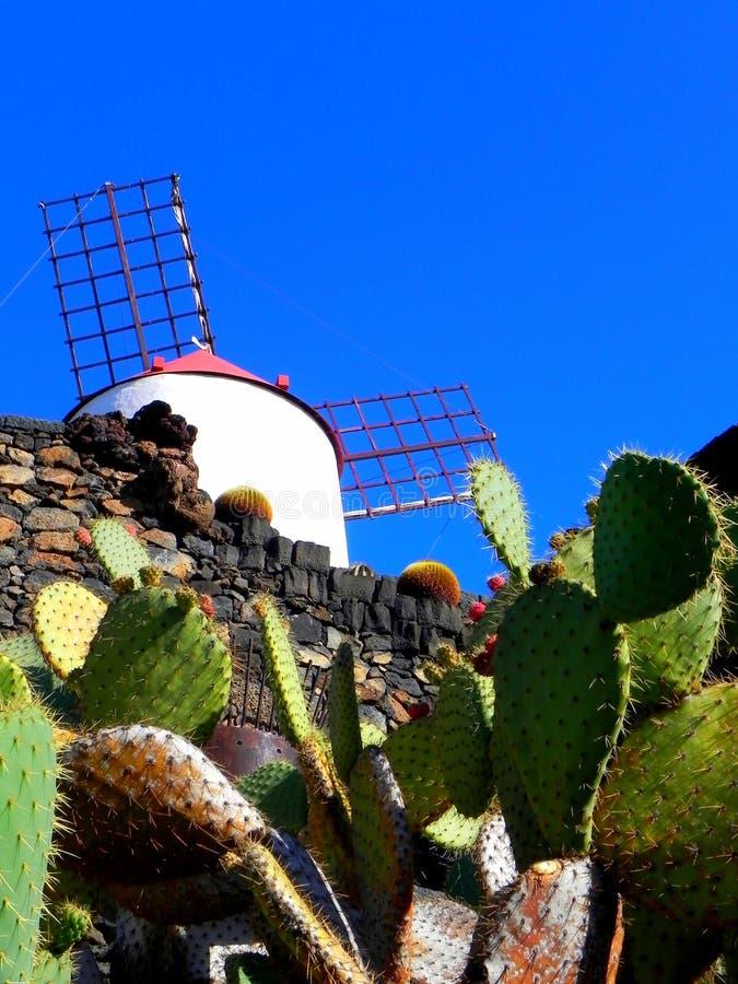 Cactus, botanical garden. stock photography