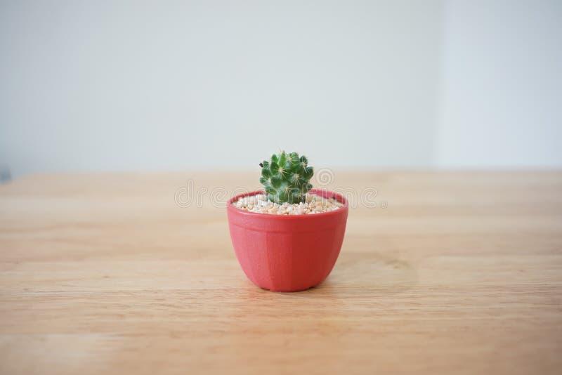 Cactus03 stock photos