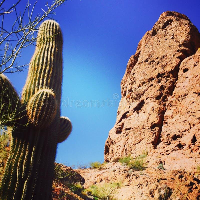 Cactus on Camelback Mountain stock photography