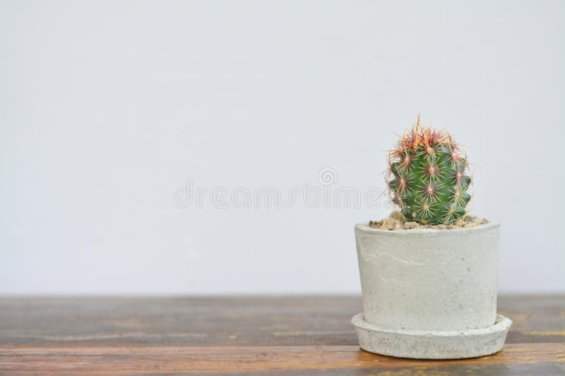 Cactus in cement pot on wooden table. Cactus in cement pot on wooden table with white background;minimal style royalty free stock images