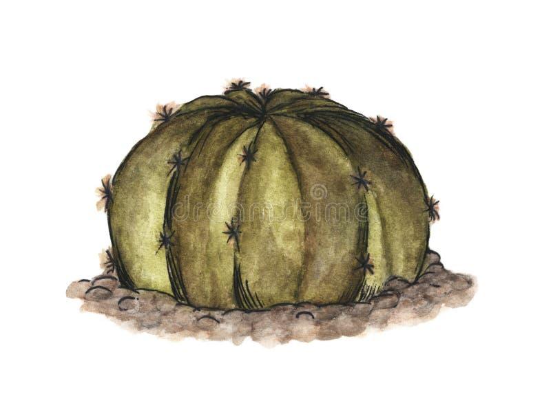 Cactus che cresce nelle rocce su fondo bianco, disegnato a mano e dipinto Illustrazione dell'acquerello illustrazione di stock