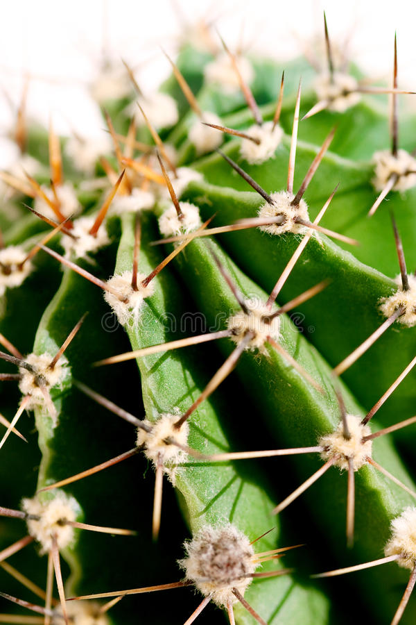 Free Cactus Close Up Royalty Free Stock Photos - 14274798