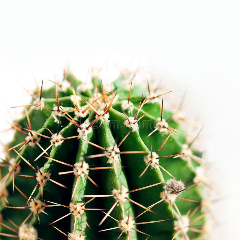 Free Cactus Close Up Royalty Free Stock Image - 14274816