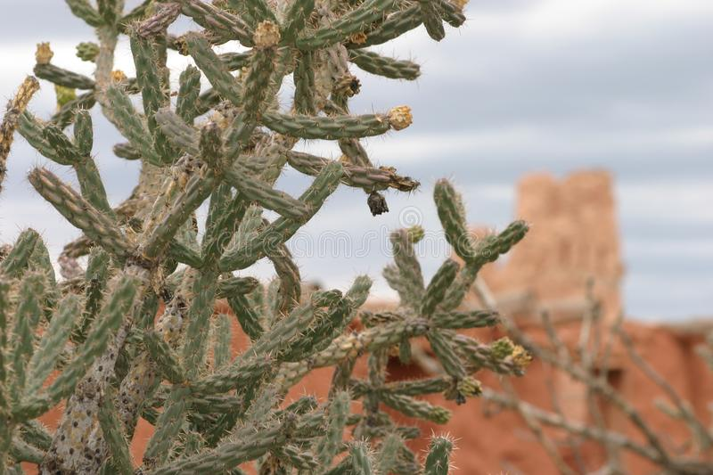 Cactus closeup with Mission in background, Abo Pueblo, New Mexico royalty free stock photos