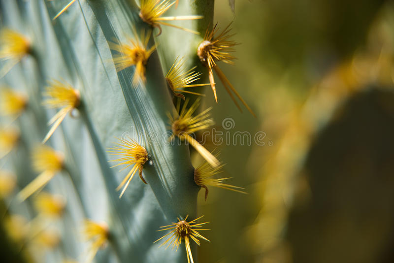 Cactus Closup photographie stock libre de droits