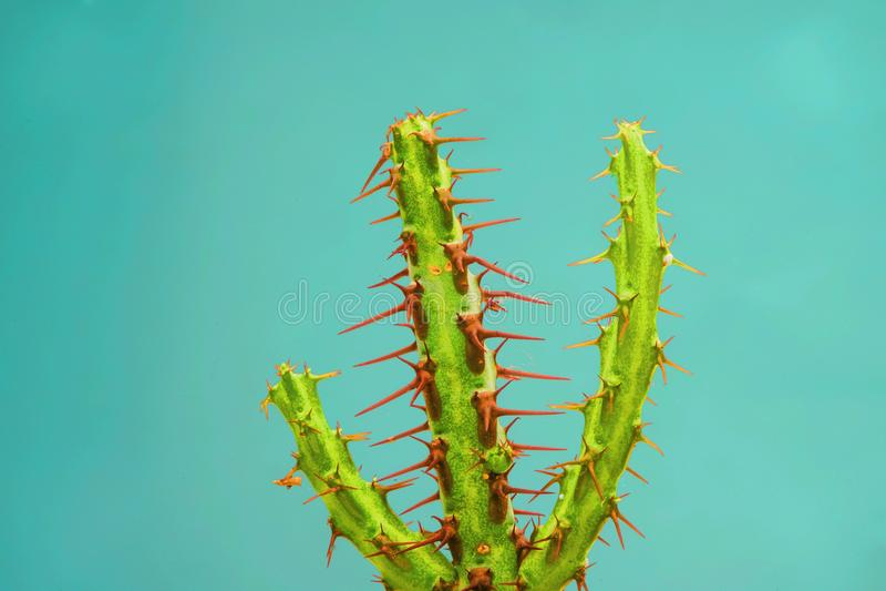 Cactus collection landscape stock photos