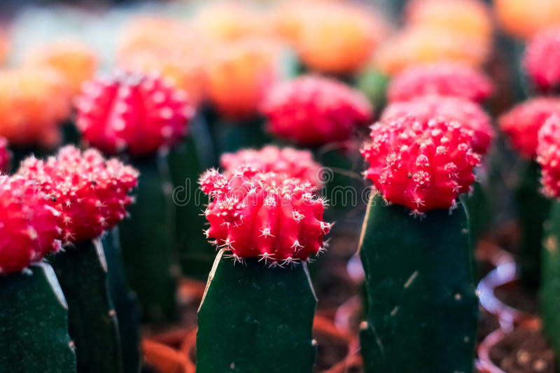 The Cactus stock images