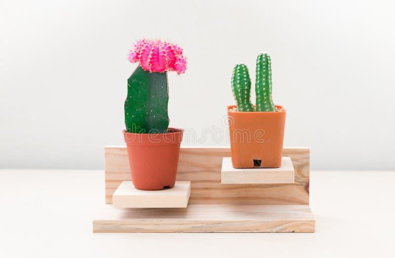 Cactus colorido dos fotos de archivo libres de regalías