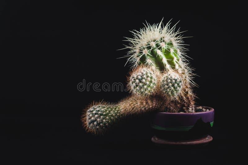 Cactus como tendencia dentro de la oficina y en casa foto de archivo
