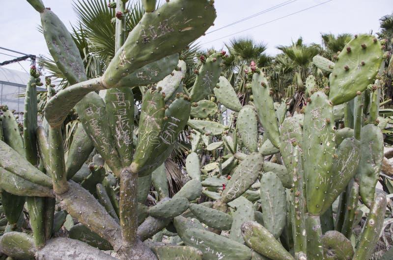 Cactus con i vari caratteri proibiti immagini stock libere da diritti