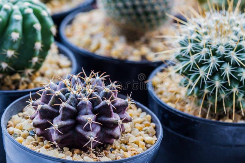 Download Cactus con las espinas foto de archivo. Imagen de verde - 42429580