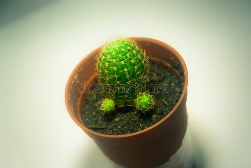 Cactus con le spine taglienti fotografie stock