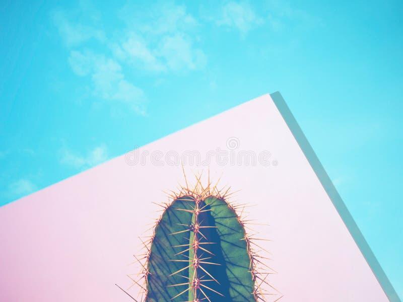 Cactus Contemporary Art. Blue Pink Mood. Minimal design fashion stock images