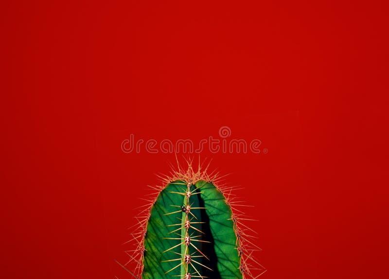 Cactus Contemporary Art. Minimal design fashion royalty free stock image