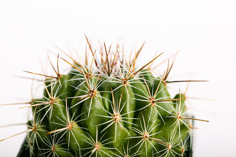 Cactus coperto di spine in flowerpot fotografie stock libere da diritti