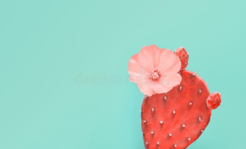 Cactus coral plant on Blue. Minimal. Pop Art Style. Fashion cactus in Coral color of the Year 2019. Minimal trendy creative stillife on blue design background royalty free stock photos