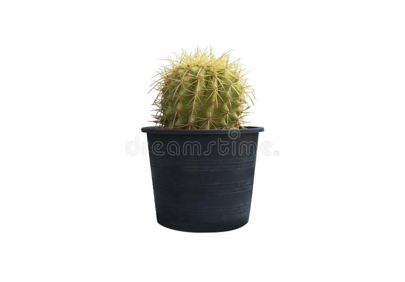 Cactus cortado con tintas en el fondo blanco fotografía de archivo libre de regalías