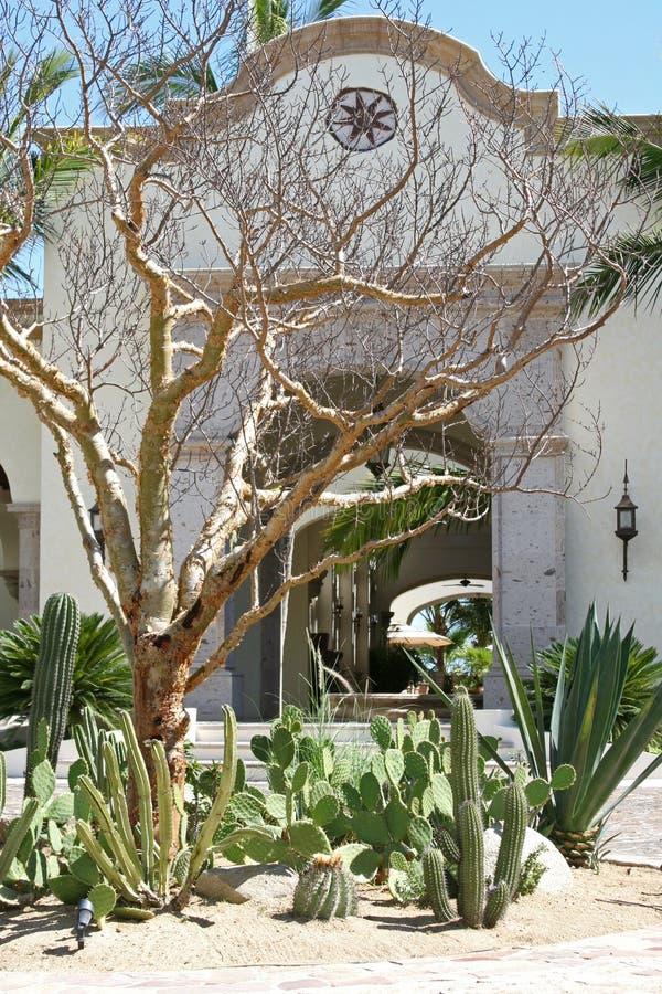 Cactus Courtyard. A cactus garden outside of a building in Cabo, Mexico royalty free stock photography