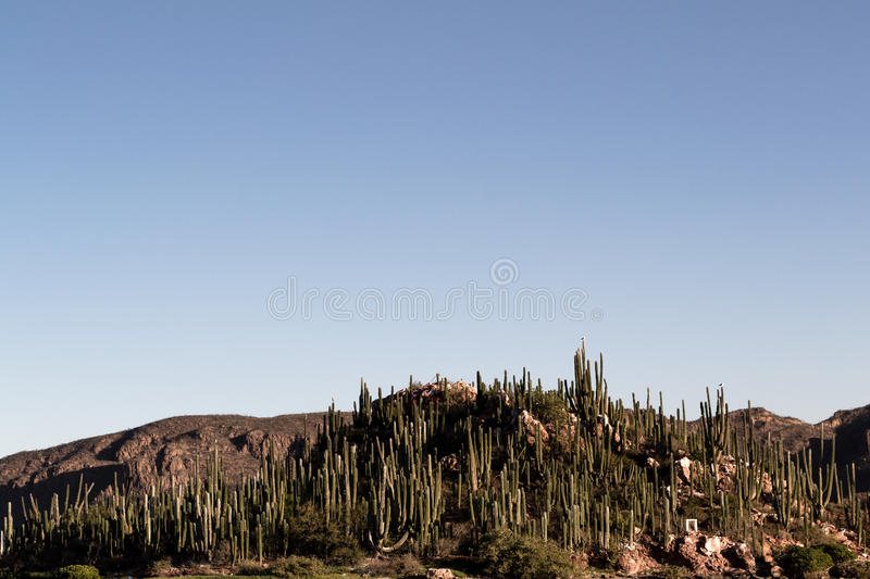 Cactus covered island in Sonora, Mexico stock photography