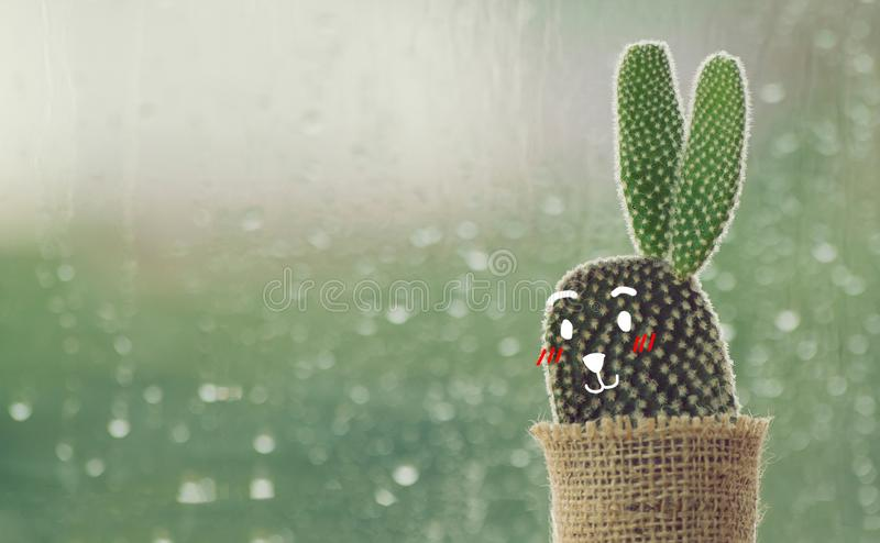 Cactus with cute face cartoon on a rainy day with water drop royalty free stock photos