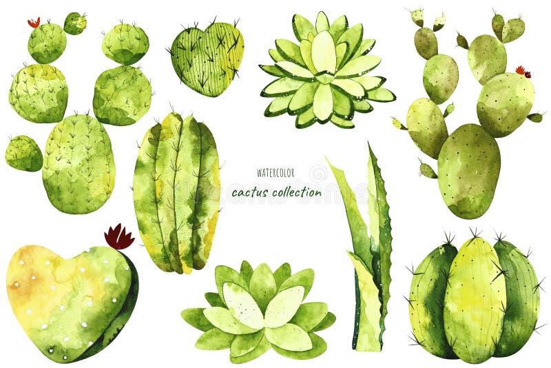 Cactus d'aquarelle et éléments de succulents illustration stock