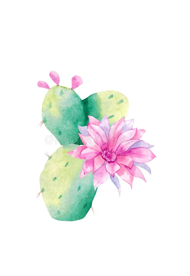 Cactus d'aquarelle Illustration de trame Illustration pour des cartes de voeux, des invitations, et d'autres projets d'impression photo libre de droits