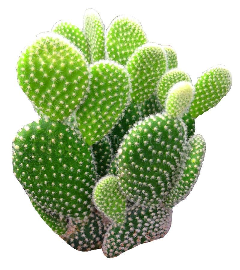 Cactus d'isolement photos stock