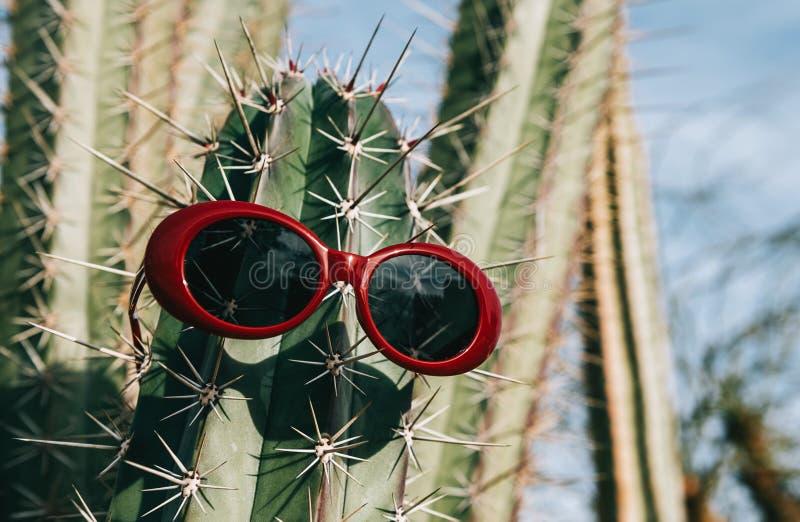 Cactus dans des lunettes de soleil sur un fond clair image libre de droits