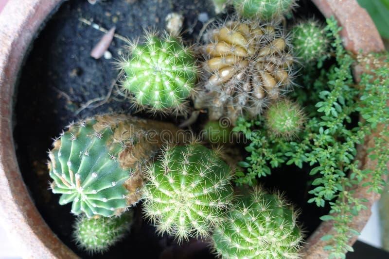 Cactus dans l'utilisation de pot de fleurs pour la décoration de conception intérieure dans le café de café images libres de droits