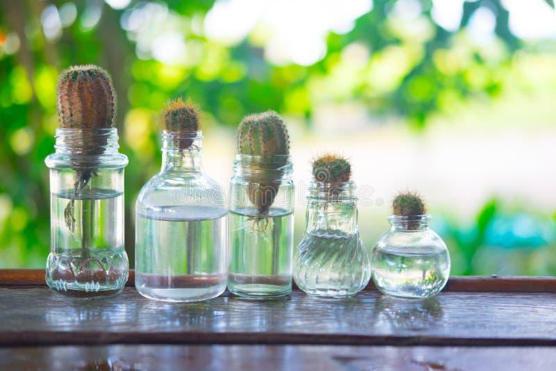 Cactus dans la bouteille en verre image libre de droits
