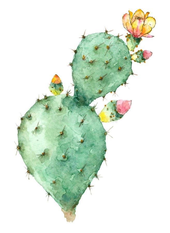 Cactus dans la fleur illustration libre de droits