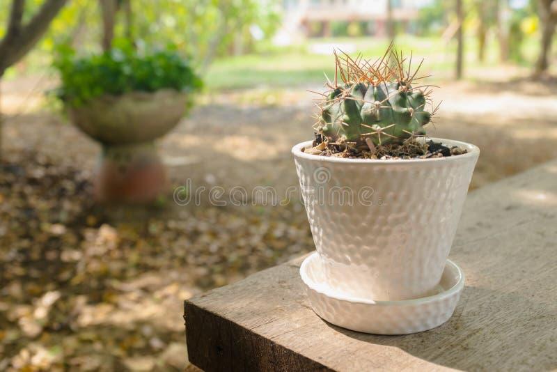 Cactus dans le jardin photos stock
