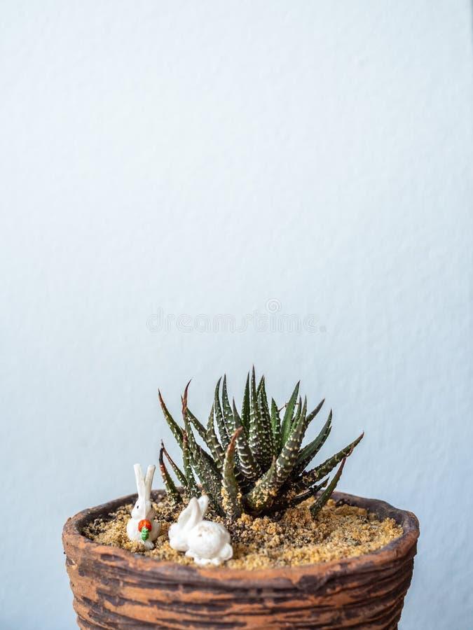 Cactus dans le petit planteur de terre cuite image stock