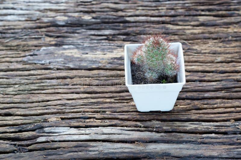 Cactus dans le pot de fleur photo libre de droits